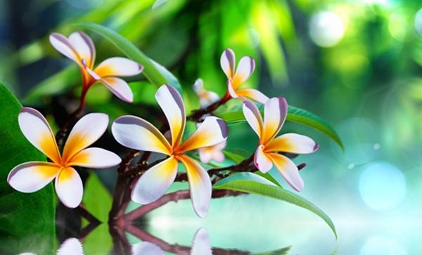 Produits de beauté naturels : les avantages de la nature